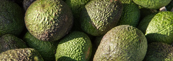 Plenty of growth left in US avocado market