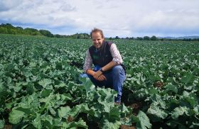 Brassicas the focus of new AHDB strategic centre