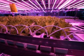 Vertical farming offers solutions