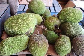 Manbulloo trials jackfruit in NT