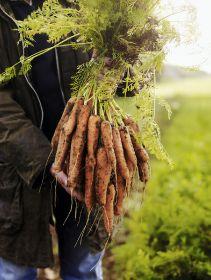 More shoppers are seeking British veg