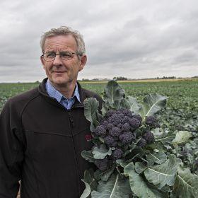 Burgundy Broccoli back after strong start