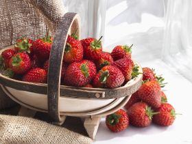 Free AVA berries for Scottish customers