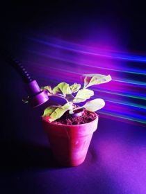 Coloured lights 'boost plant control'