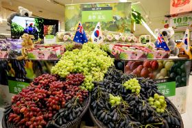 Persistence pays off for Australian grapes