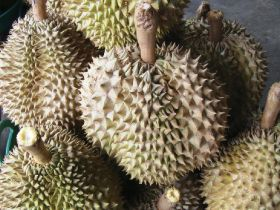 Optimising Thailand's durian trade