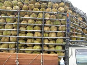 Thailand to resume durian exports
