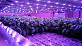 Scotland set for new vertical farm