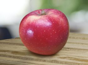 Hot climate apple continues to impress