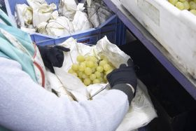 Vietnamese campaign starts for Spanish grapes