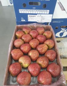 Cameo apples arrive in India