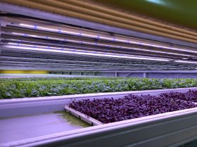 Vertical farming comes to Kuwait