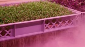New crops developed for vertical farming