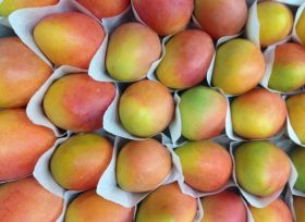 Export boost for Colombian mangoes