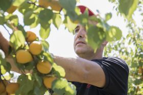 Elior offers eco-responsible fruit