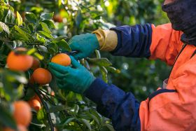 Citrus industry calls for action on new visa