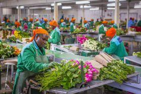 Kenyan flower exports bounce back