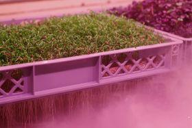 Vertical farming 'at a crossroads'