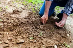 APHA to hire 100 plant health inspectors