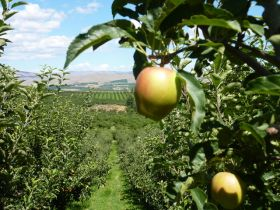 Major growth for CMI Orchards