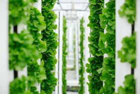 Bayer unveils vertical farming venture