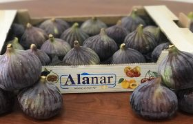 Alanar prepared for fig growth