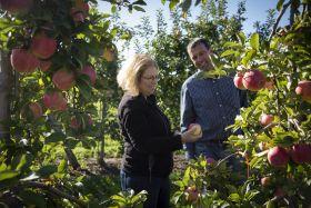 Cornell releases new apple varieties