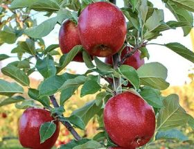 Starr Ranch Growers opens Yakima office