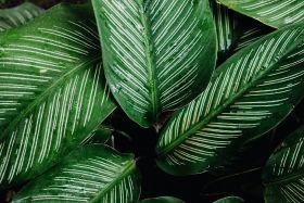 Morrisons acquires plant supplier