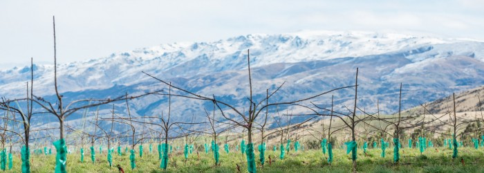 Investors back NZ cherry developments