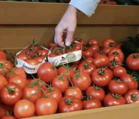 Innovative tomato pack tackles waste