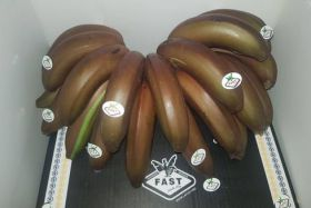 CI bananas now available in red