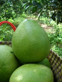 US to approve Vietnamese pomelo exports