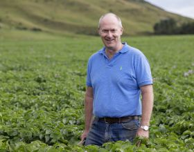 New protections for British seed potatoes