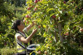 Raymond Blanc launches British topfruit season
