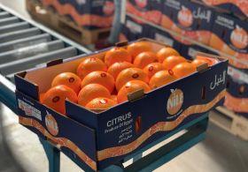 Orange boom a boon for Egypt