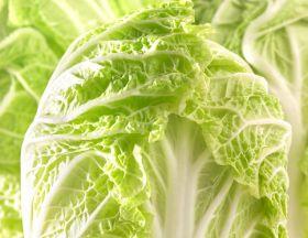 Korea faces cabbage shortage