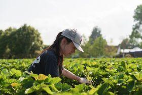 NZ berry producer anticipating DIY boom