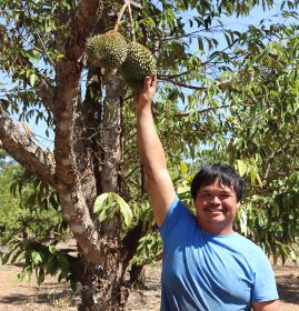 NT-grown 'king of fruit' debuts in WA