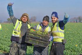 Seasonal worker scheme urgently needed