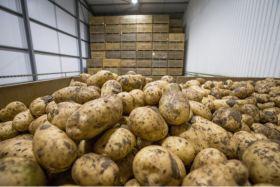 AHDB confirms potato levy ballot