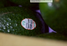 Avocados From Mexico scoops marketing prize
