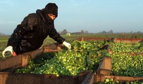 Tesco hails 'best Xmas for sprouts in years'