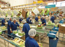 EU demand for Brazilian fruit 'set to rise five per cent'