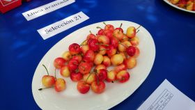 Chile bets on new cherry varieties