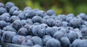 Coalition opposes US blueberry import restrictions