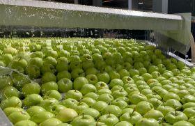 Turkish apples gain Thai entry