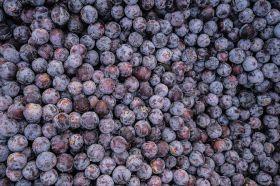 Bumper season for Queen Garnet plums