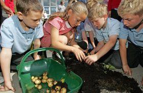 Green light for schools potato programme