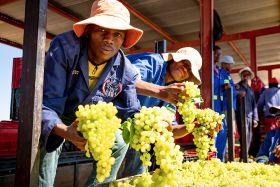 Raisin hopes high in South Africa